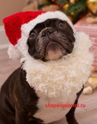 новогодняя вязаная шапочка для собаки спицы