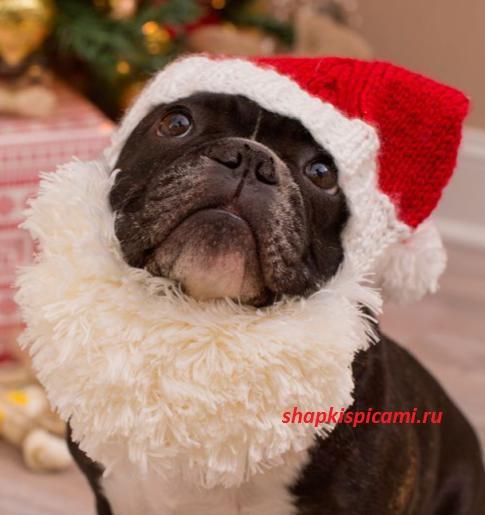 вязаная шапка для собаки на Новый год
